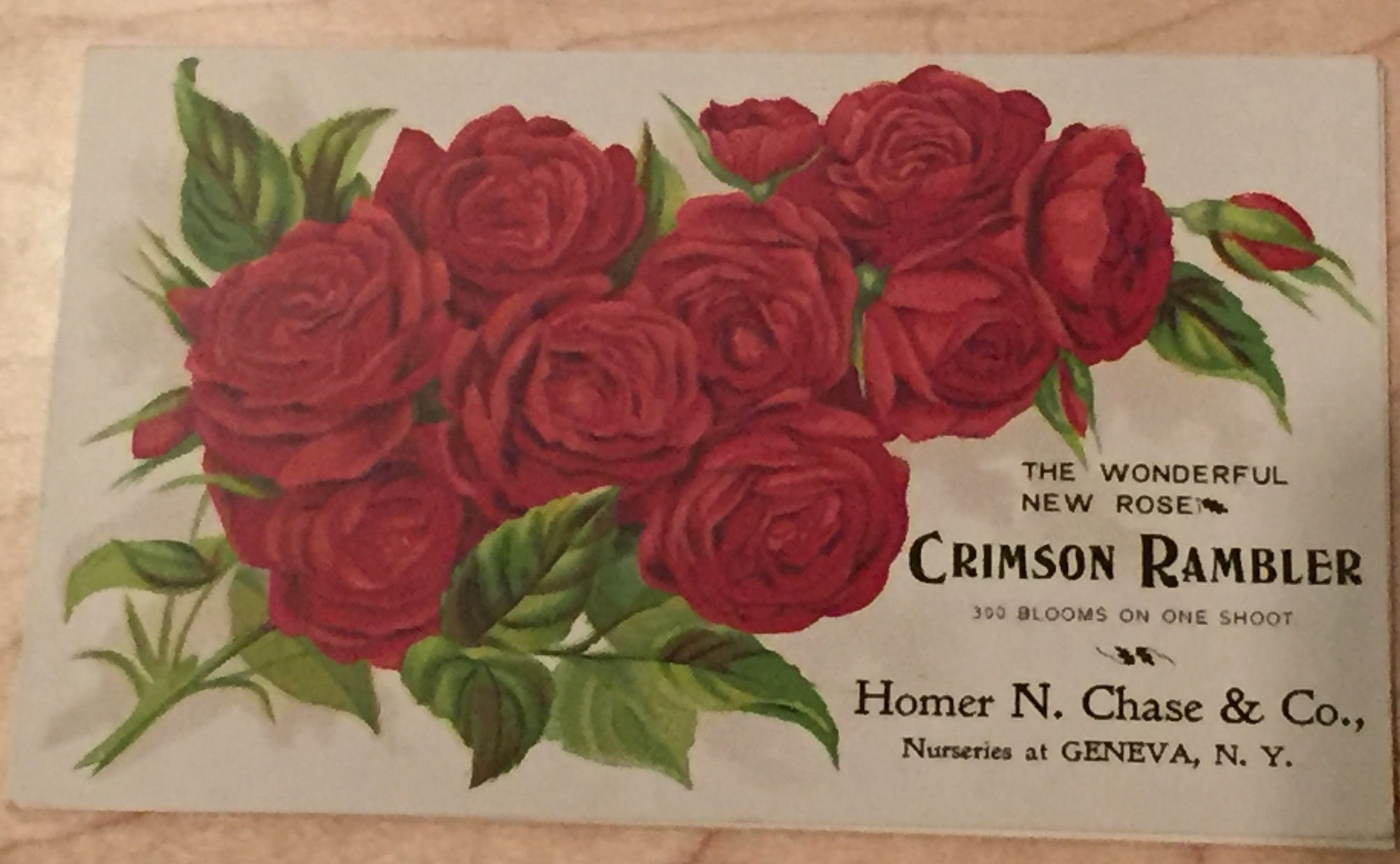 Crimson Rambler trade card